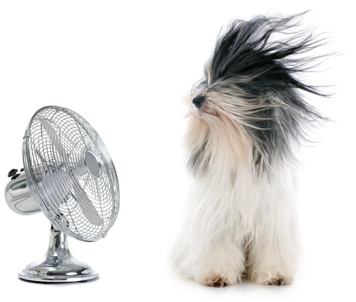 chien avec ventilateur dans sa direction